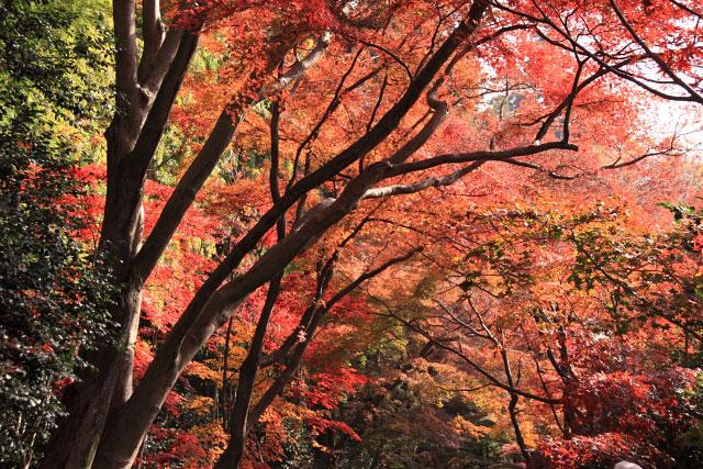 平林寺の紅葉・・・1_d0026817_2163672.jpg