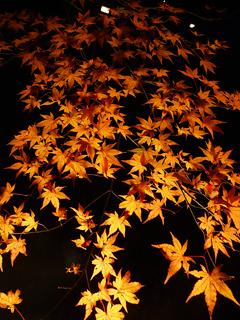 伊豆の紅葉が見頃です の巻_c0053520_18225974.jpg