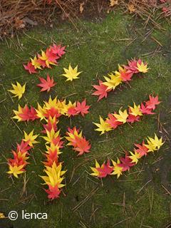 伊豆の紅葉が見頃です の巻_c0053520_18403964.jpg