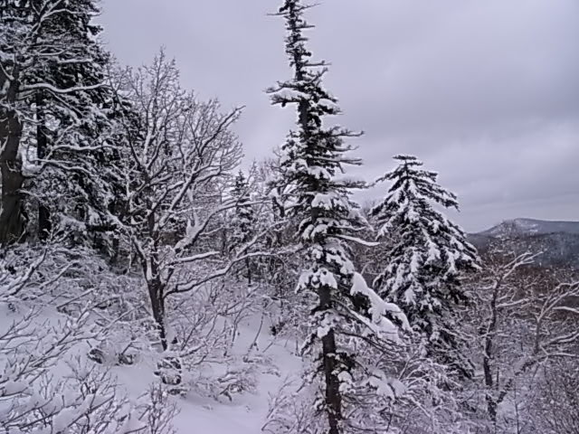 雪なら雪で_e0173533_17412152.jpg