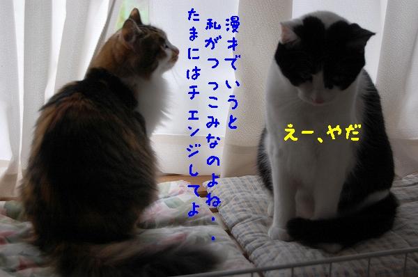 c0181639_1353146.jpg