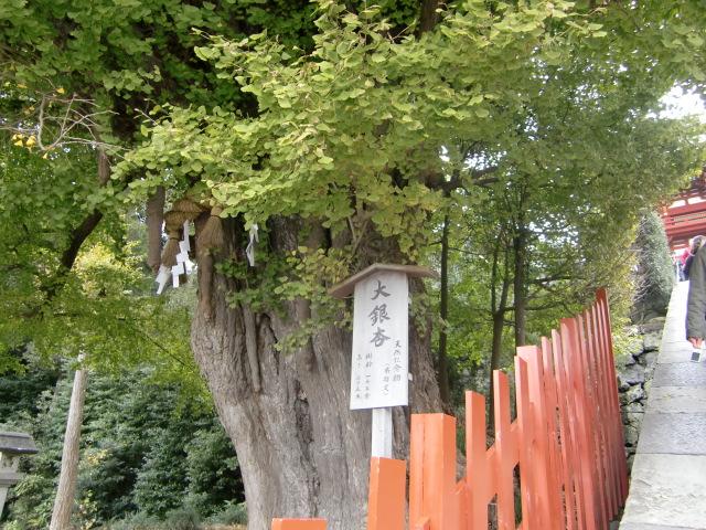 鎌倉散歩№4 紅葉とKIBIYA_d0080653_133653.jpg