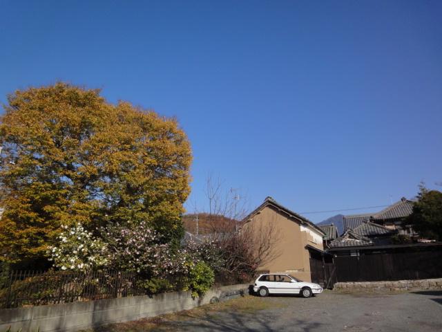 庭のもみじ_b0124462_12155310.jpg