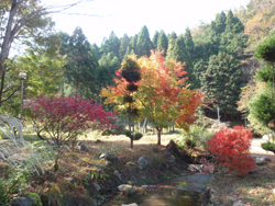 秋の綾部で自然体験_e0008880_21281071.jpg