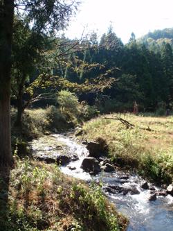 秋の綾部で自然体験_e0008880_2128366.jpg
