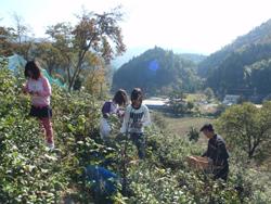 秋の綾部で自然体験_e0008880_21295681.jpg