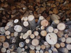 秋の綾部で自然体験_e0008880_21313030.jpg
