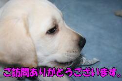 b0136683_17174461.jpg