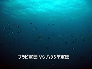 f0144385_131441.jpg