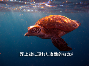 f0144385_132025.jpg