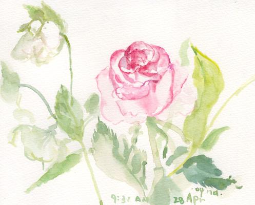 室内の花 3_d0115092_8344741.jpg