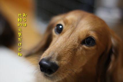 b0044804_1449787.jpg
