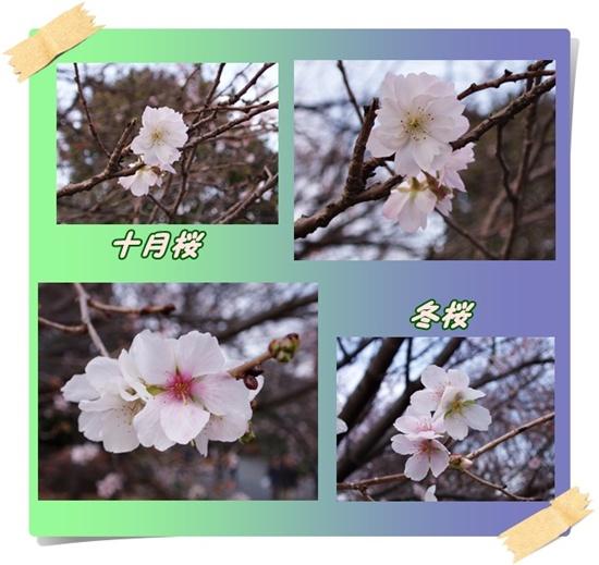 c0051107_1350366.jpg