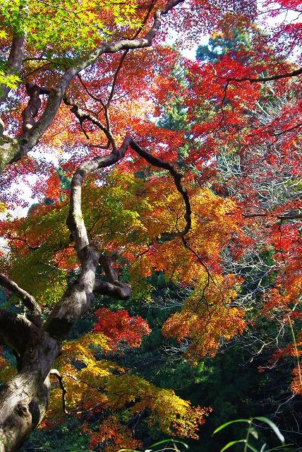 佐倉市城址公園_d0147812_17291991.jpg