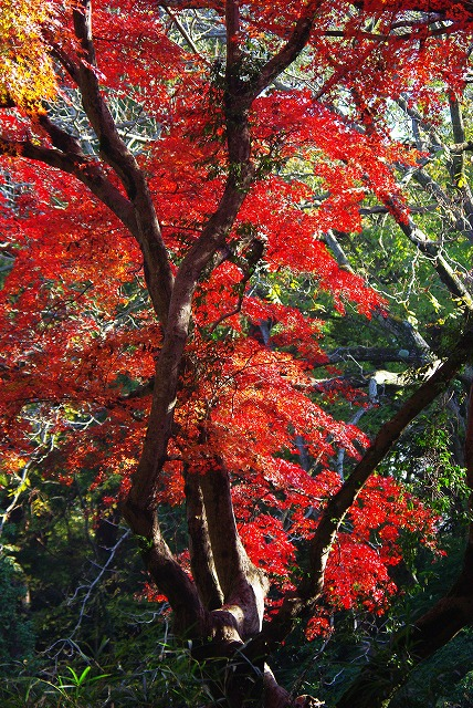 佐倉市城址公園_d0147812_17294611.jpg