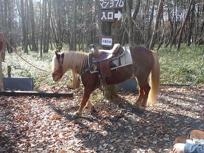 お馬にまたがりご来店 【Chef's Report】_f0111415_2092426.jpg