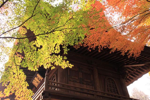 平林寺の紅葉・・・2_d0026817_20245968.jpg