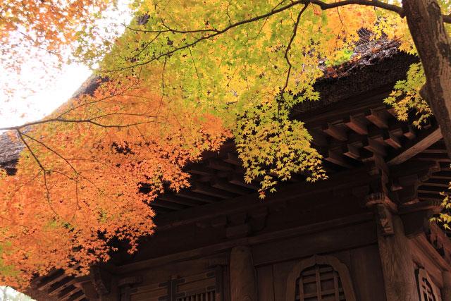 平林寺の紅葉・・・2_d0026817_20251687.jpg