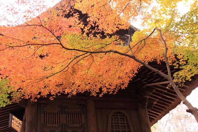 平林寺の紅葉・・・2_d0026817_20253228.jpg