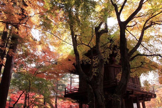 平林寺の紅葉・・・2_d0026817_20254690.jpg
