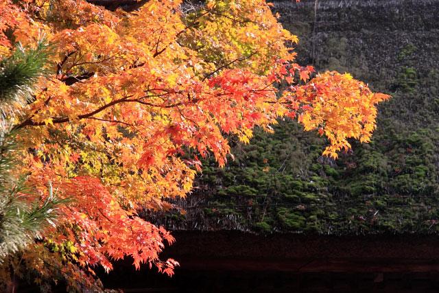 平林寺の紅葉・・・2_d0026817_20262478.jpg
