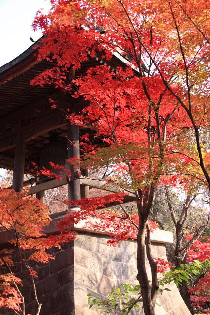 平林寺の紅葉・・・2_d0026817_20263823.jpg