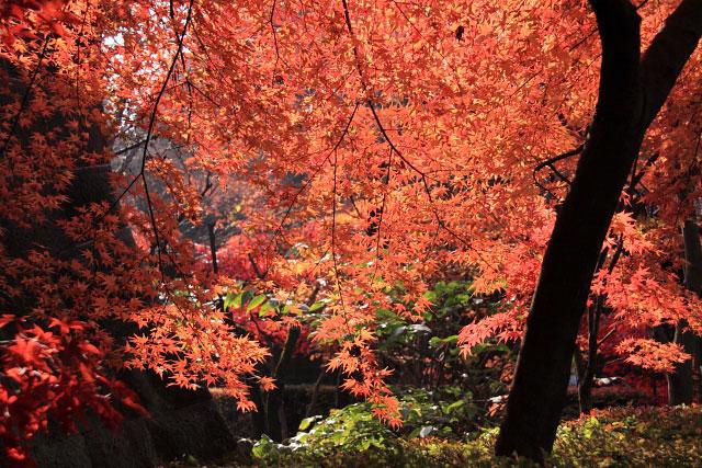 平林寺の紅葉・・・2_d0026817_20271085.jpg