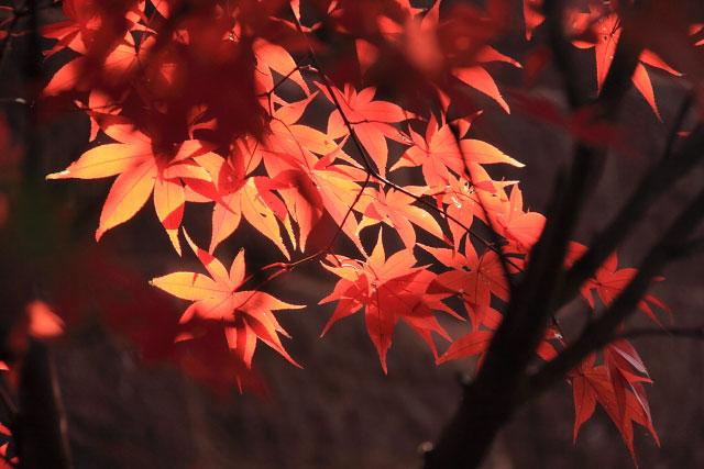 平林寺の紅葉・・・2_d0026817_20272352.jpg