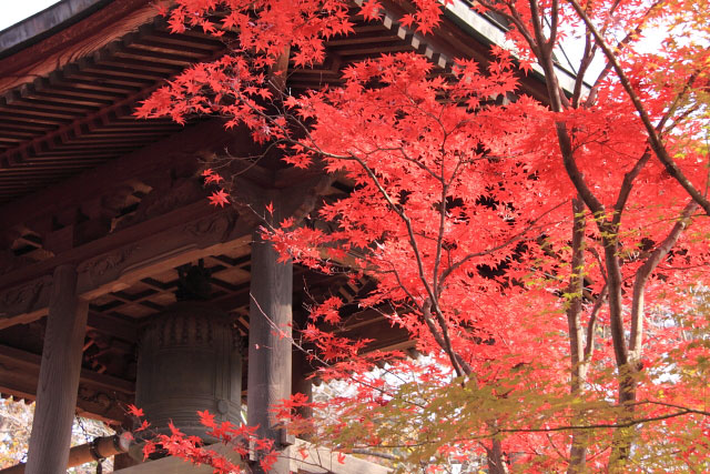 平林寺の紅葉・・・2_d0026817_20385853.jpg