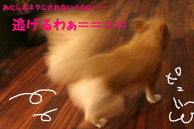 b0130018_20151034.jpg