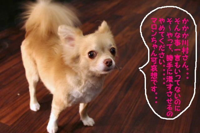 b0130018_2015643.jpg