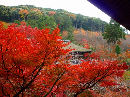 紅葉の京都 清水寺_b0150120_10422966.jpg
