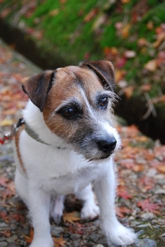 手作りごはん暦約5年の愛犬の健康状態レポート_c0099133_013882.jpg