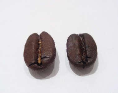 酸味のコーヒー? 苦みのコーヒー?_a0143042_1725718.jpg