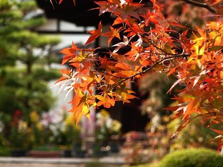 だるま寺と法金剛院の紅葉_c0057946_19413078.jpg