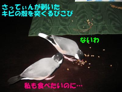 b0158061_21302825.jpg