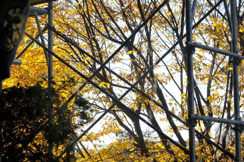 写真家セバスチャン・サルガドと辻井伸行をみて_a0031363_1774022.jpg