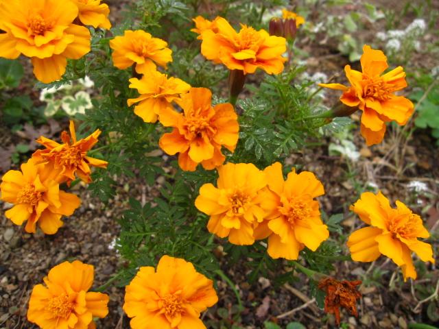 夏の花も冬の花も_e0181373_1951671.jpg