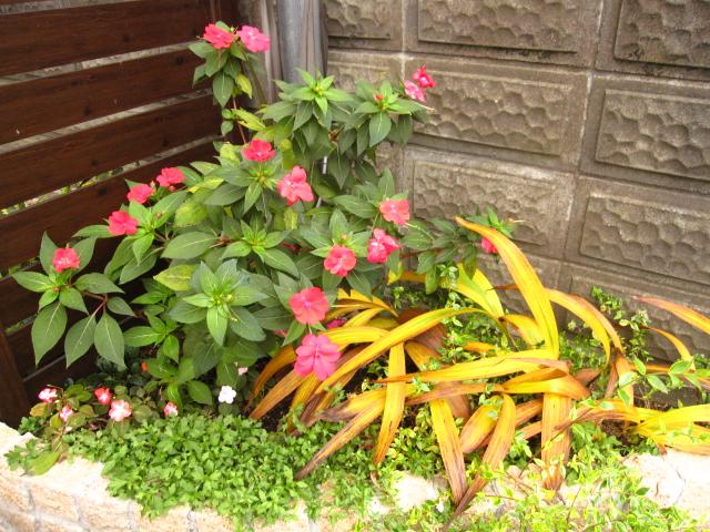 夏の花も冬の花も_e0181373_2019559.jpg