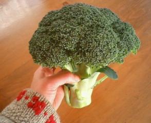 野菜でうきうき_b0011075_203749100.jpg