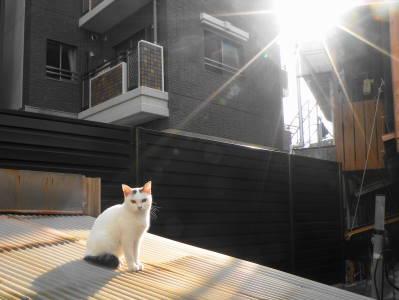 猫たちのNight and Day_c0193077_20391862.jpg