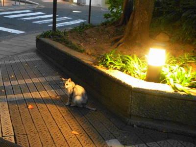 猫たちのNight and Day_c0193077_204062.jpg