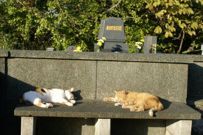 猫たちのNight and Day_c0193077_2041132.jpg