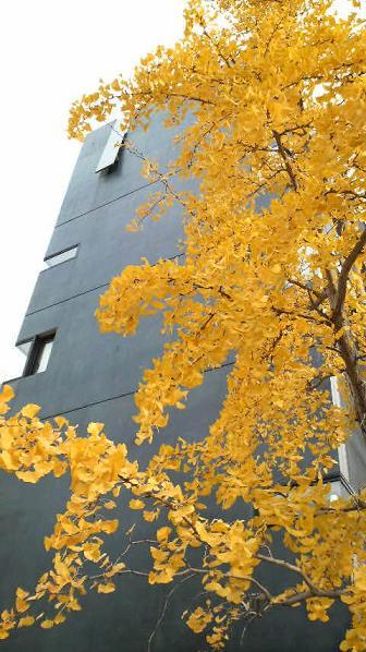 まだまだ美しい街路樹と落ち葉♪_c0116778_9203193.jpg