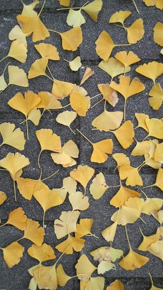 まだまだ美しい街路樹と落ち葉♪_c0116778_9213468.jpg