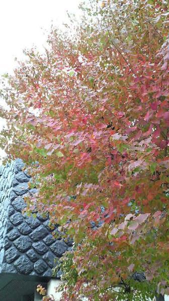 まだまだ美しい街路樹と落ち葉♪_c0116778_9225621.jpg