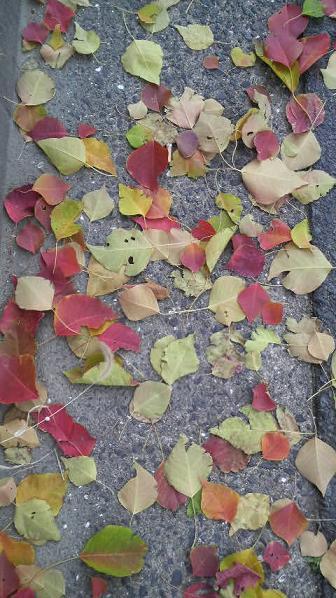 まだまだ美しい街路樹と落ち葉♪_c0116778_9234047.jpg