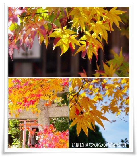 紅葉の嵐山_a0053987_21551134.jpg
