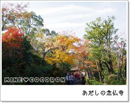 紅葉の嵐山_a0053987_22435291.jpg