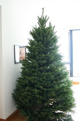 Christmas tree 2009_d0088196_23273893.jpg